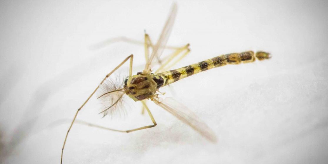 Peur de Zika ? Pourquoi ?